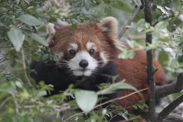 Shanghai Zoo (V)