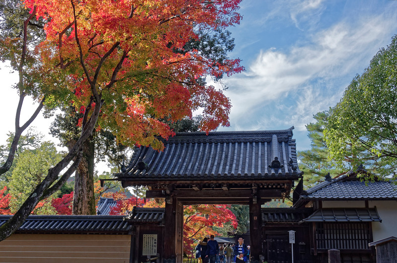 Seasonal Colors of Japan