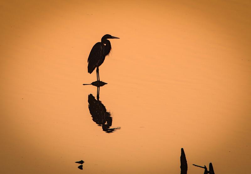 Heron Silhouette 011418 (1 of 1).jpg