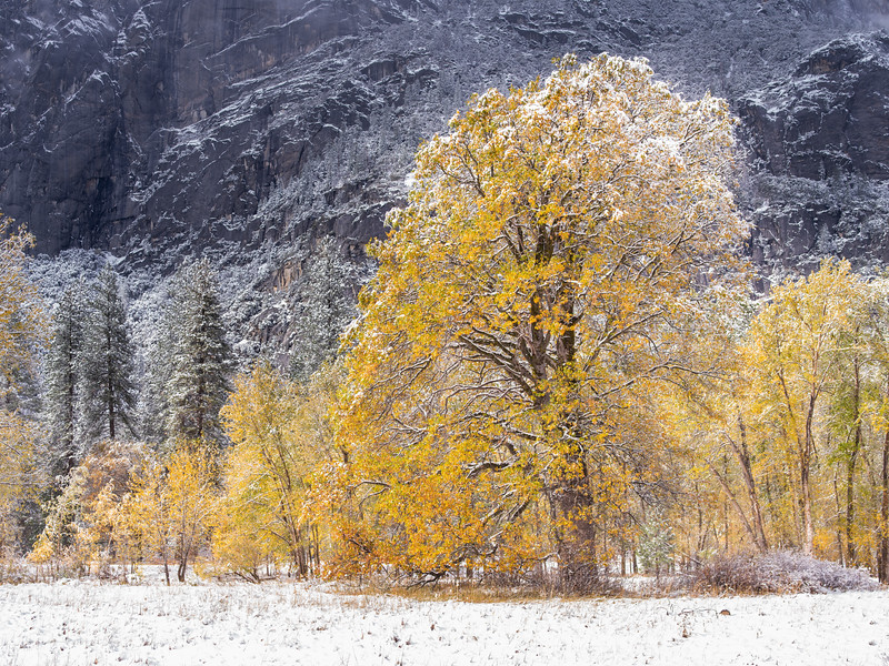 Late Autumn Snowfall, Yosemite