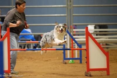 Dog Gone Fun USDAA Belton Dec 2013