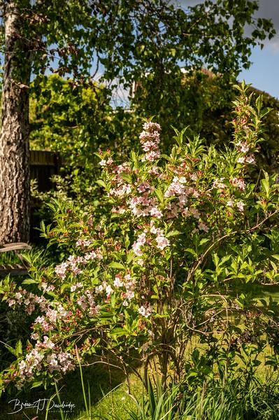Garden at home-3011.jpg