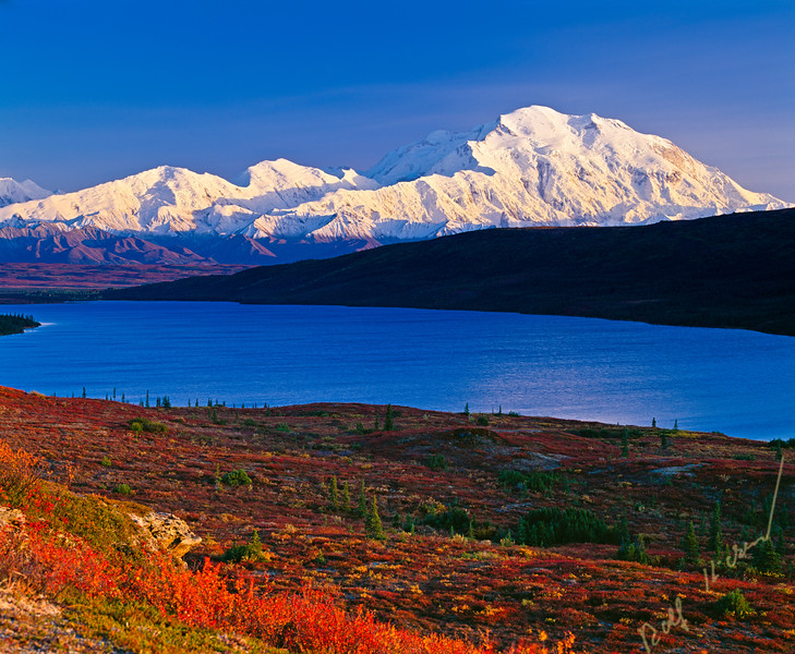 Mount McKinley (Denali) with red fall colors on a clear blue sky day with Wonder Lake in front of the mountain, autumn, Denali National Park and Preserve, Alaska, USA