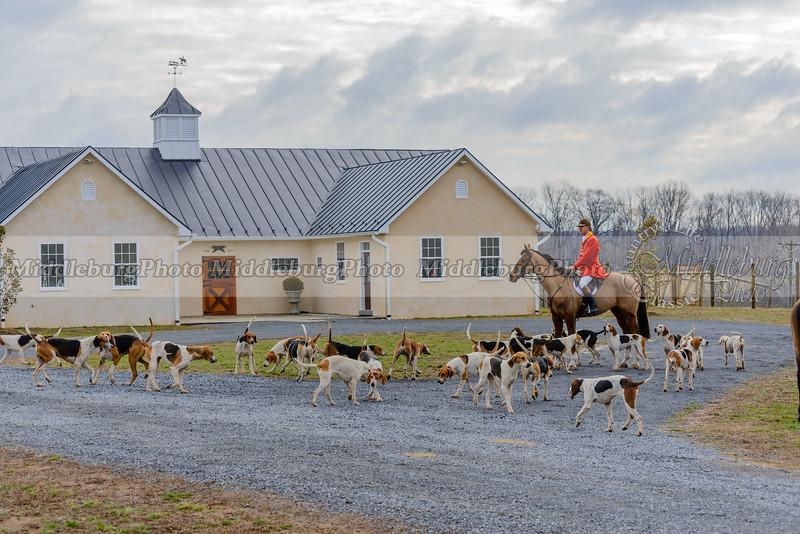 Piedmont Fox Hounds @The Kennels 3-19