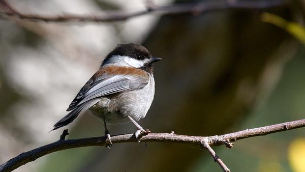 Monterey Birds 12/14/2017