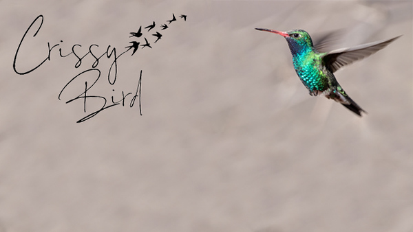 FB Banner Logo - Hummingbird.jpg