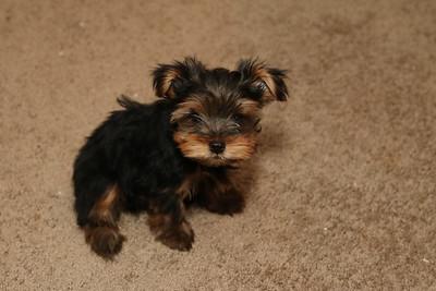 Pup Pup & Zak