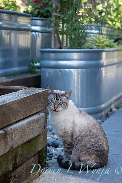 The Chartreuse Garden_1031.jpg