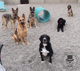 Doggy Daycare - August 2014