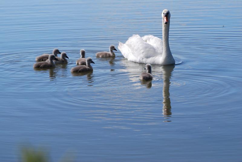 Mom & Kids.JPG