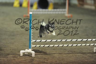 Dog Agility 2012