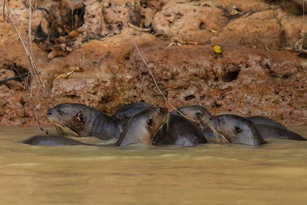 Brazil - Cuiaba River Porto Jofre, Northern Pantanal