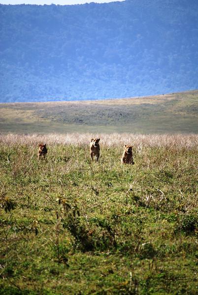 Ngorongoro (54).JPG