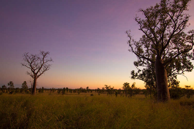 Genevieve Hathaway_The Kimberley_Gibb River Road_Windjana Gorge_boabs at sunset.jpg