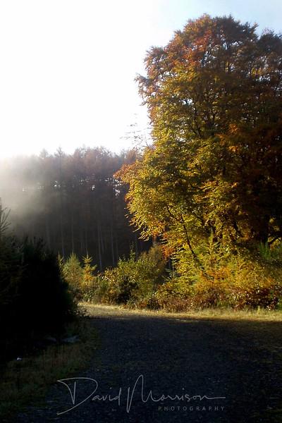 012-Mabie-Forest-Haze.jpg