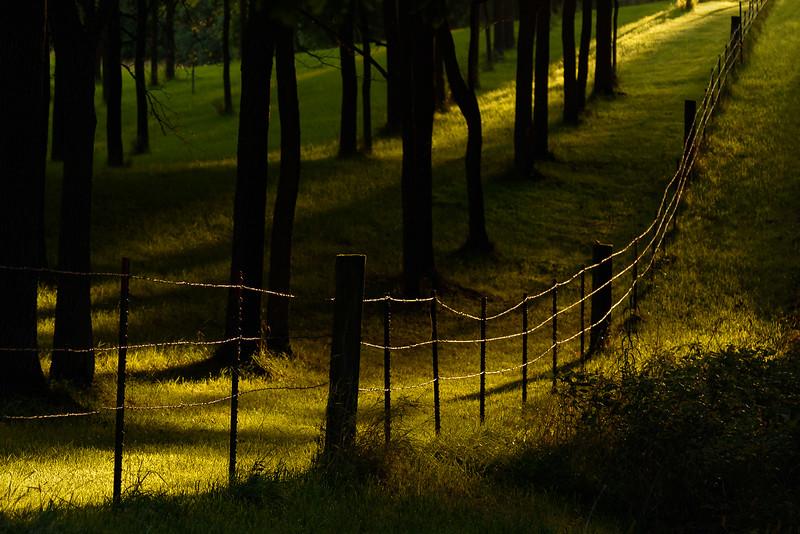 DA099,DP,Fence and light.jpg