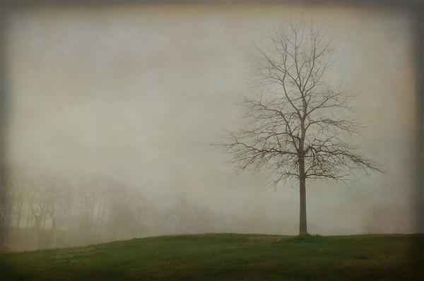A lone tree in the fog near the Fort Williams parade ground in Cape Elizabeth, Maine.