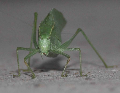 Green insect 10-2009