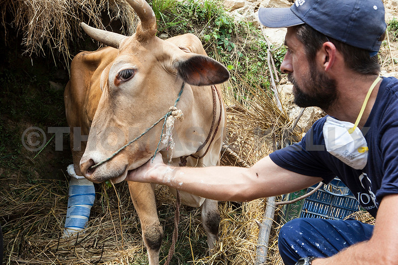 World Vets International Aid  for Animals in Sidhupalchok, Nepal.