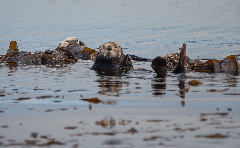Morrow Bay Otters and AG Roosters-24.jpg