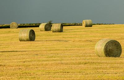 Iowa Landscapes