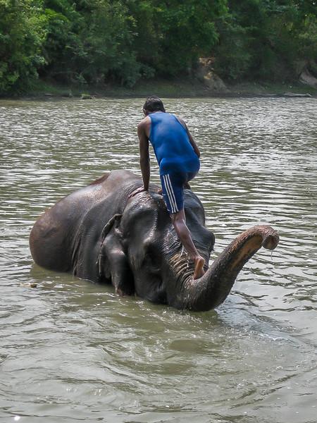 Chitwan 071.jpg