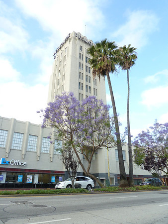 2011-05-26-miracle-mile-jacaranda-palms