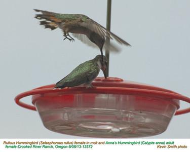Rufous&Anna'sHummingbirdsF13572.jpg