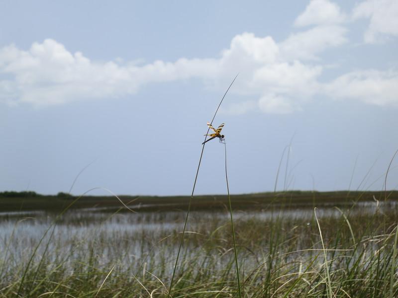2012-08 Florida KeysIMG_0864 - 2012-08-17 at 13-50-48-22.jpg