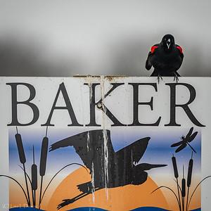 NEW!  Baker Wetlands, Lawrence, KS  Spring 2020