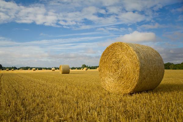 Hay bales around Northmoor, Oxfordshire, England in July 2010