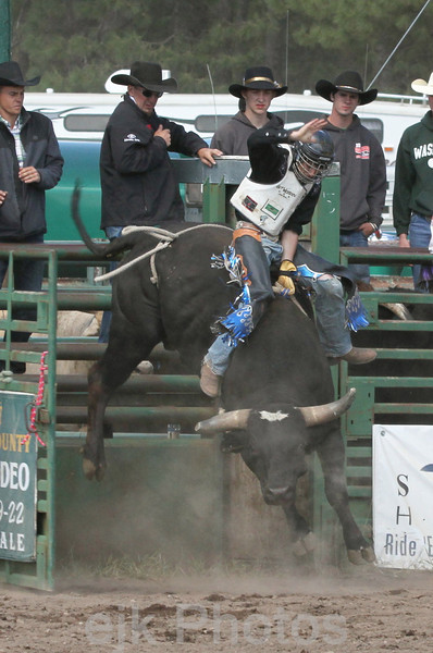 Bull Riding Ketchum Kalf /Glenwood 2011