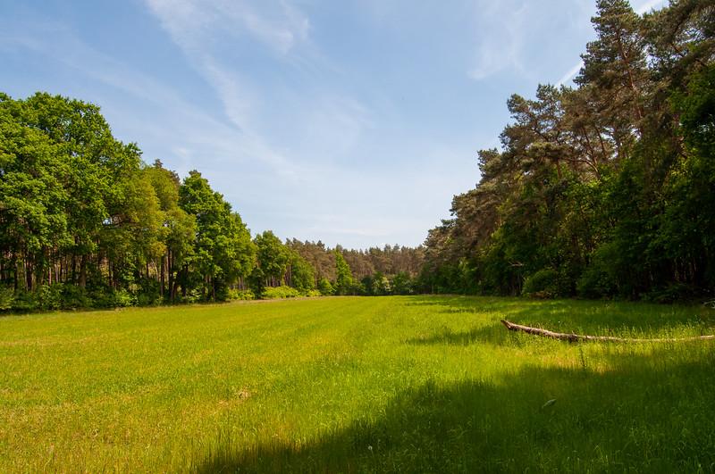 Nationaal Park Hoge Kempen - Duinengordel, omgeving Donderslag 19.jpg