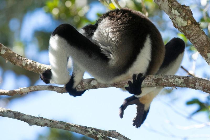 Madagascar_2013_FH0T9612.jpg