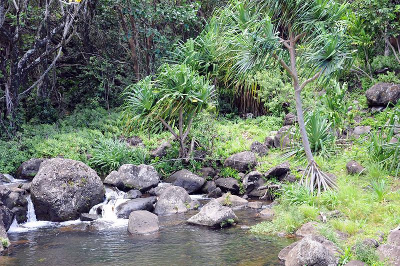 Hala tree (Pandanaceae, Screwpine Family), Limahuli Garden and Preserve, Kauai.