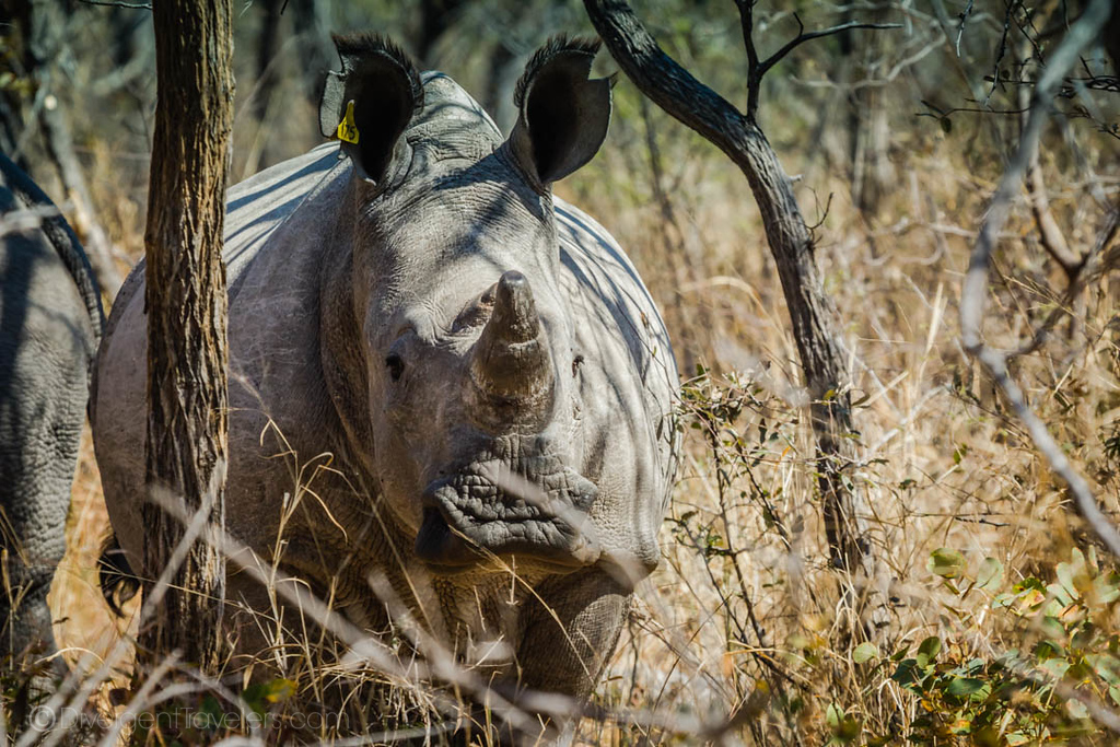 Best Safari in Africa -rhino