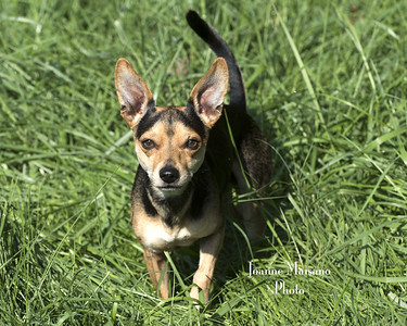 MHF - Pups 9-19-18