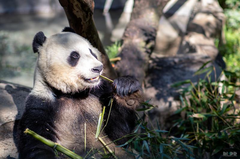 panda 003.jpg