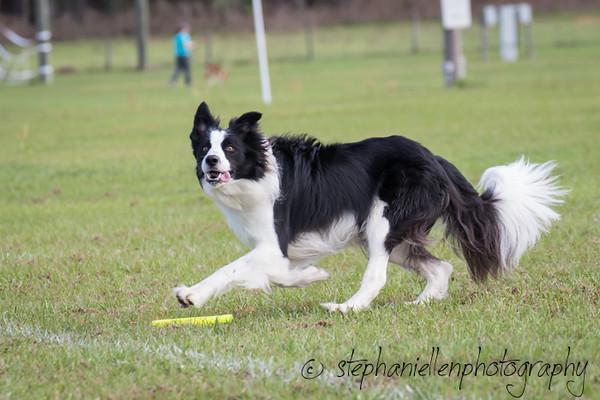 _MG_2464Up_dog_International_2016_StephaniellenPhotography.jpg