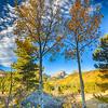 Apex of Autumn's Glory