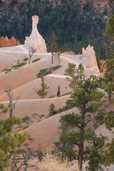 Nature Site 1_05.JPG