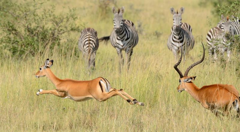 20160215__KET8068_Serengeti_Day_7.jpg