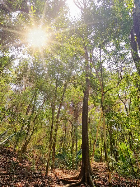 Sun peeking into the dense tropical forest and trees