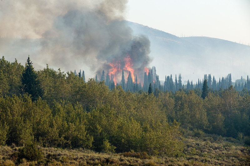 Aug 24 FIRE OPERATIONS ACTIVE TORCHING.jpg