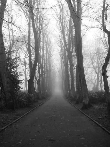 2013_Maxwell fog