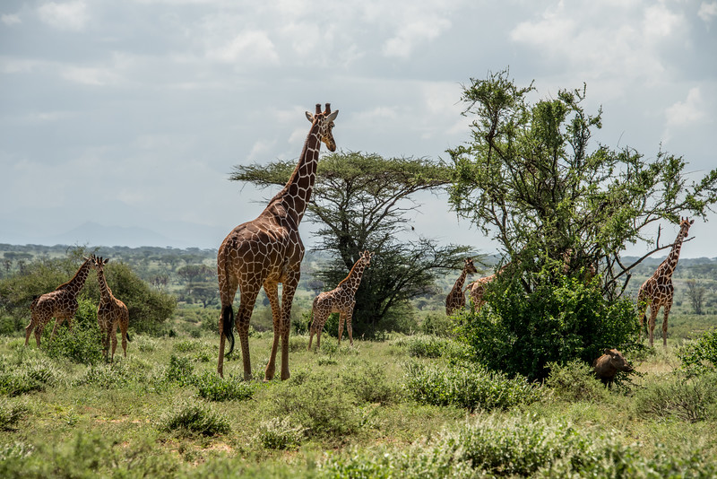 Samburu (69 of 70).jpg