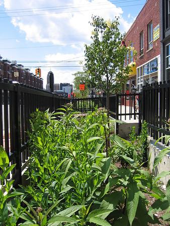 Lansing Urban Rain Gardens Lansing, MI