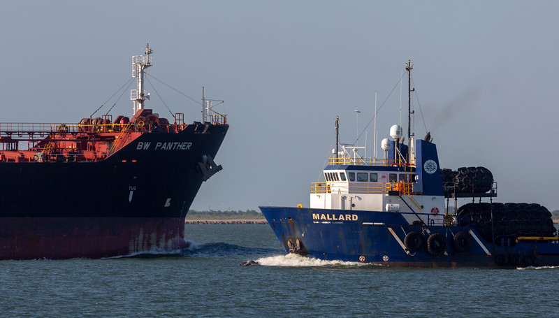 Tanker BW Panther and Mallard cross paths.  Two Dolphins in between
