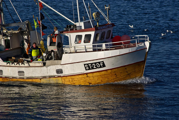 Røst - glimpse of winter fishing season
