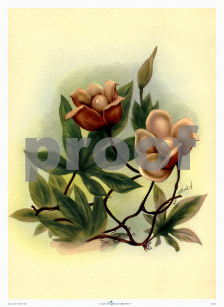 125: Ted Mundorff -- 'Wood Rose' Floral Art Print, ca 1940-1950. (PROOF watermark will not appear on your print)